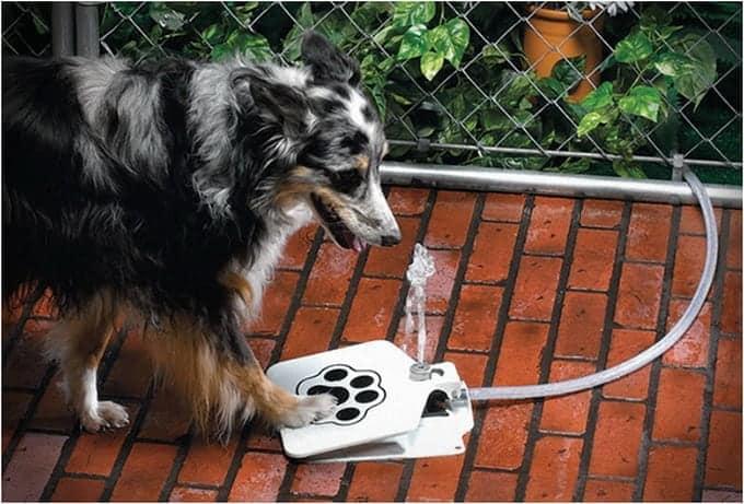 2a267 doggie fountain 5
