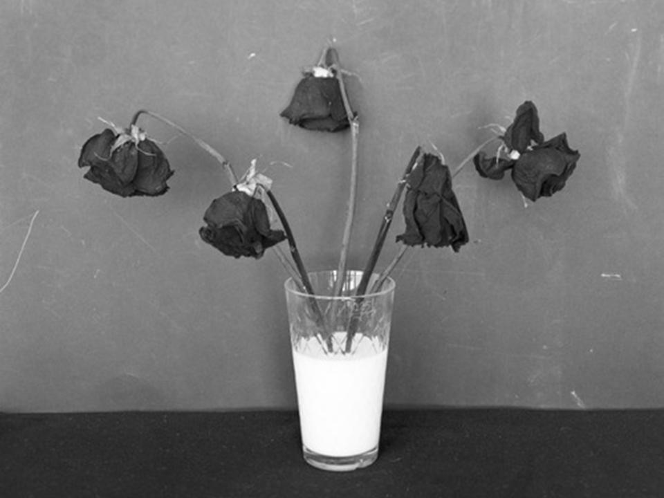 likeflowers