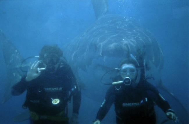 5704055-R3L8T8D-650-Shark-Week-Discovery-Banned-In-Hollywood-08