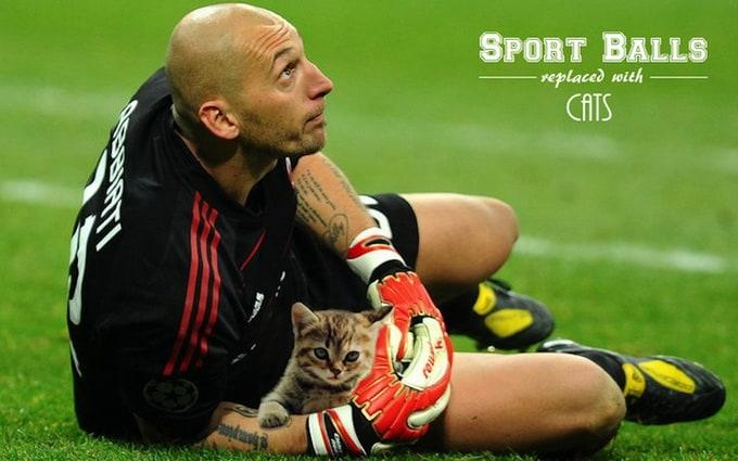 sportsballsreplacedwithcats_05