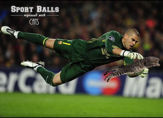 sportsballsreplacedwithcats_09