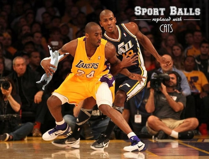 sportsballsreplacedwithcats_12