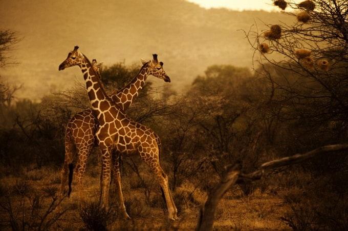 Kenya-Photography-2