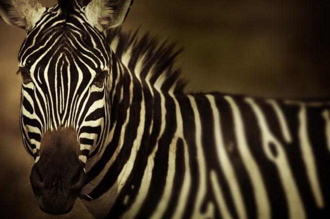 Kenya-Photography-9