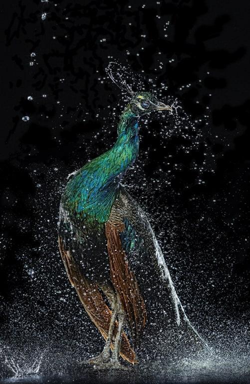 shutlivuj-proekt-splash-6
