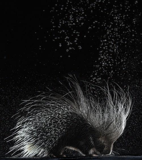 shutlivuj-proekt-splash-7