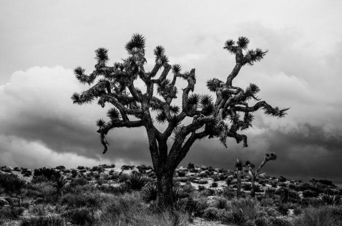 juliette-charvet-photography-01-600x_07