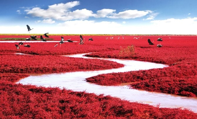 red-beach-china