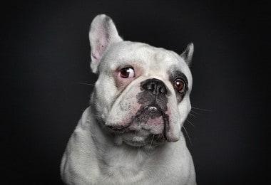 Dog portraits by Ralph Hargarten