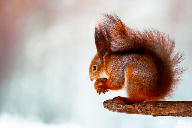 Art Photography Of Squirrels-2