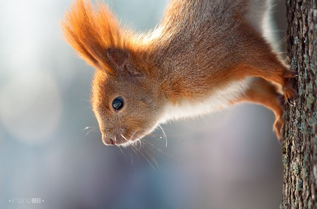 Art Photography Of Squirrels-3