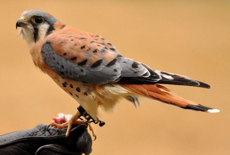 birdie02