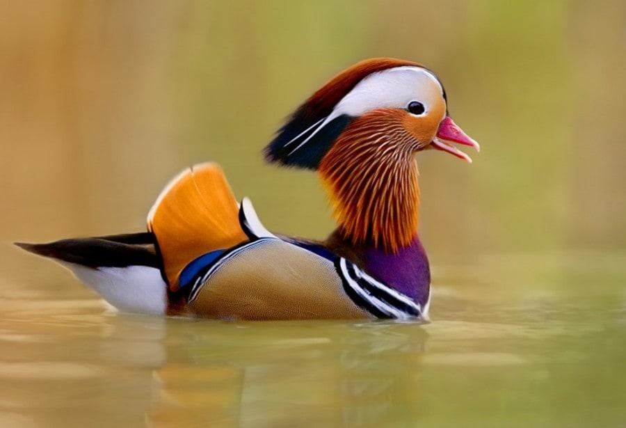 birdie08