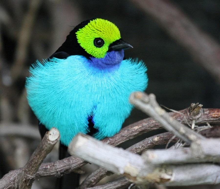 birdie09