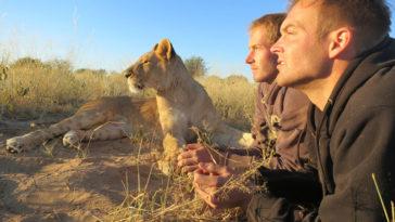 lion whisperers modisa botswana by nicolai frederk bonnen rossen 5