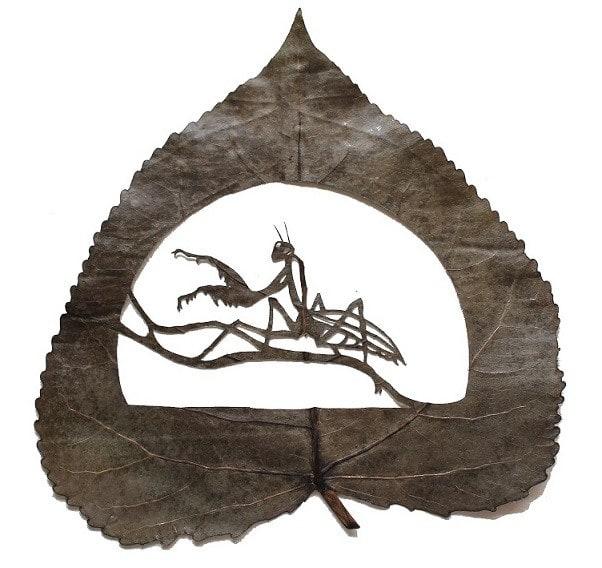 mantis-religiosa-26-cm-x-24-cm-species-populus-alba