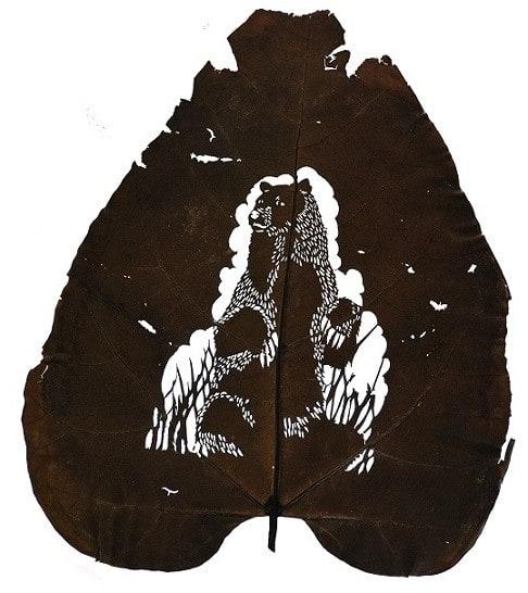 oso-30-cm-x-40-cm-species-catalpa-bignonioides