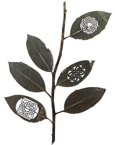 rama-i-30-cm-x-21-cm-species-ilex-aquifolium