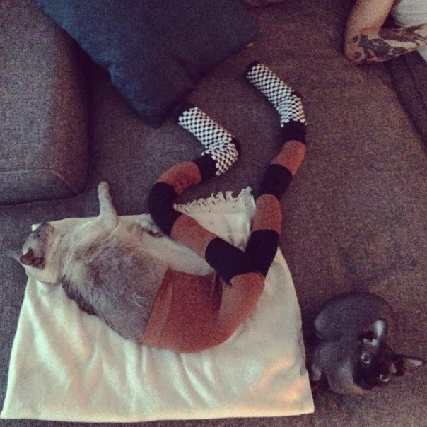 """Funny photo-series """"Cats with tights"""""""