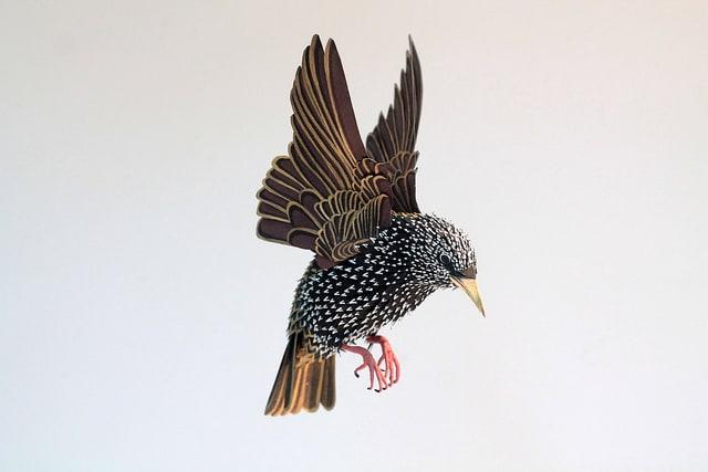 Paper-Birds-by-Diana-Beltran-Herrera-6