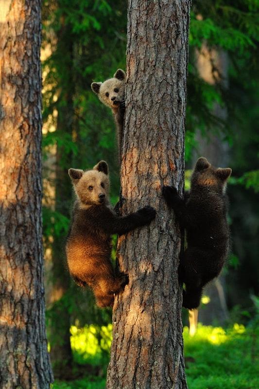 Three little bears - 2013-11-04_228045_nature.jpg