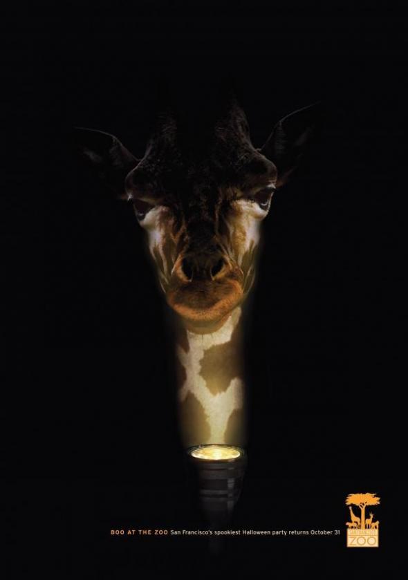 san-francisco-zoo-giraffe-small-60082