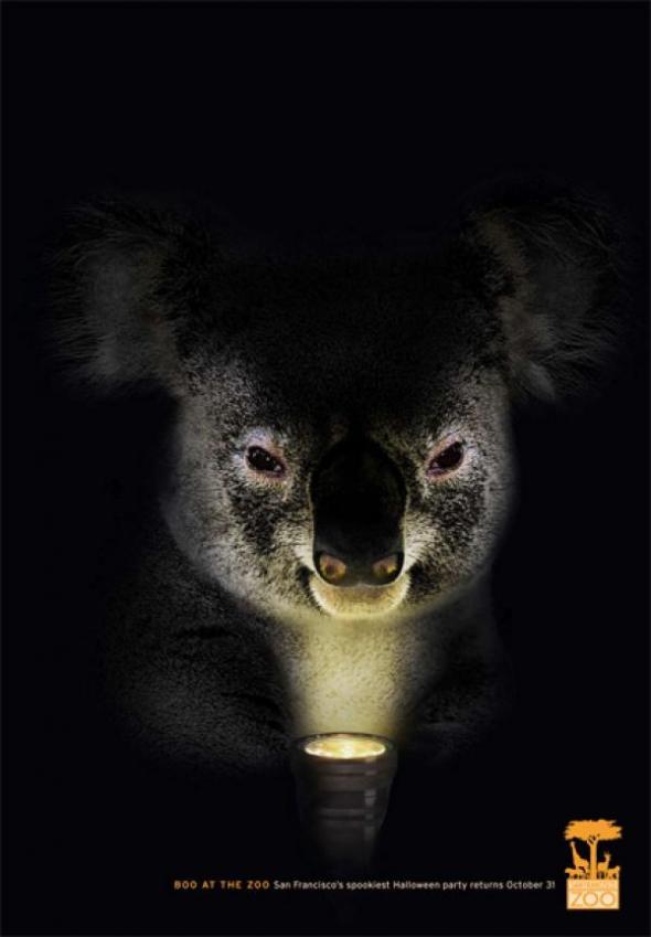 san-francisco-zoo-koala-small-52926