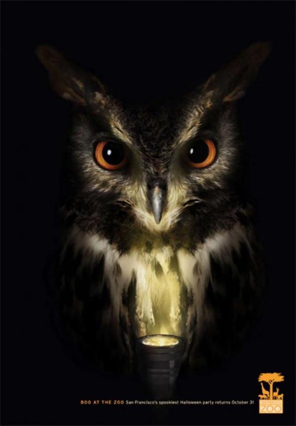 san-francisco-zoo-owl-small-40411