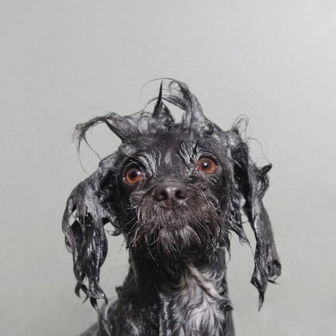 wetdog11