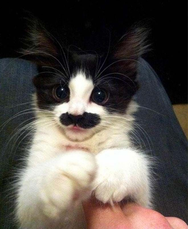 animalswmustache13