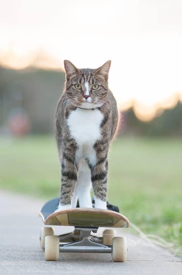didga_skating_cat_02