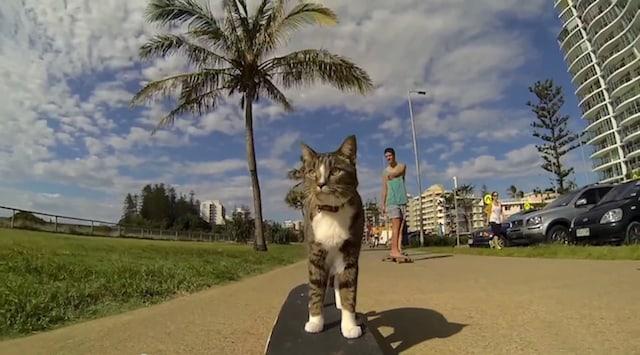 didga_skating_cat_03