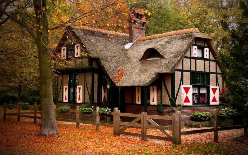 forest_house_7