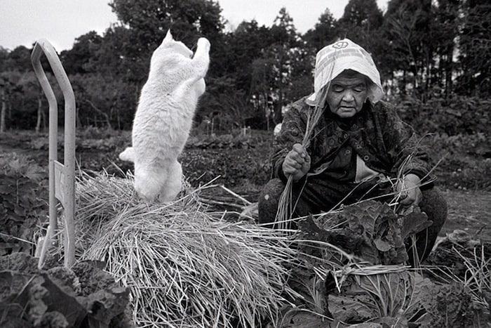 grandmother-and-cat-miyoko-ihara-fukumaru-10