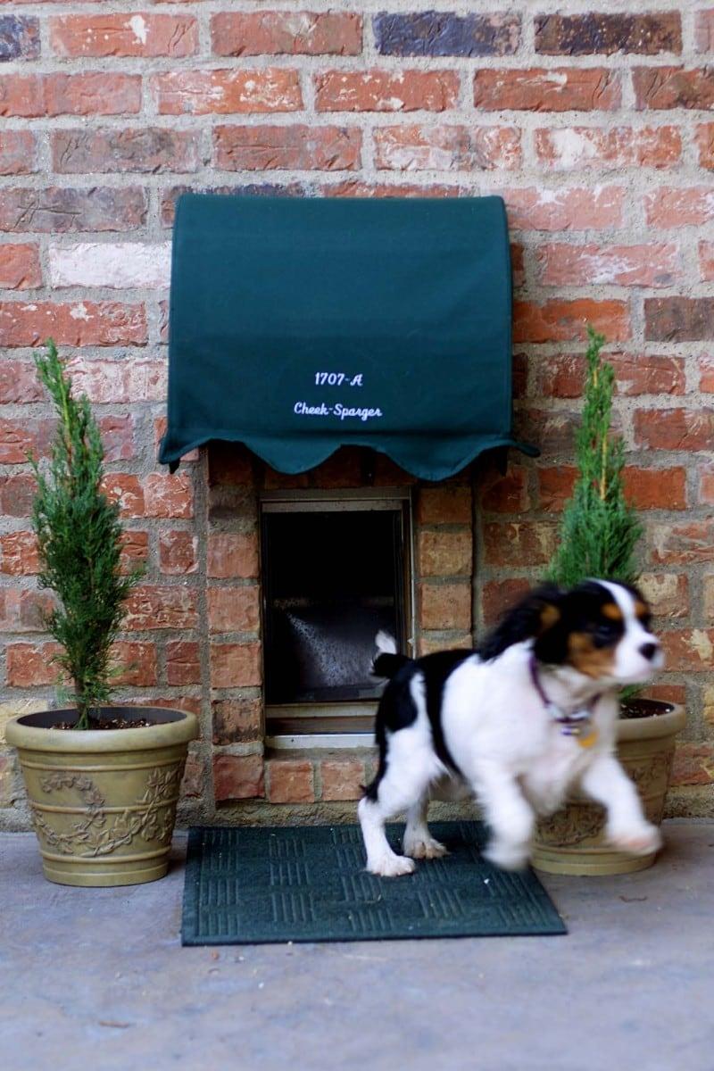 dog entrance 11