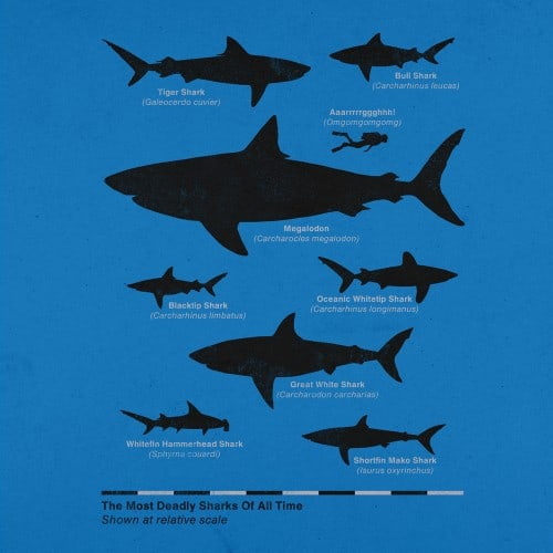 Aled-Lewis-The-Worlds-Most-Deadly-Sharks