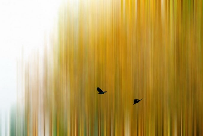 The 2014 Smithsonian Photo Contest Finalists10