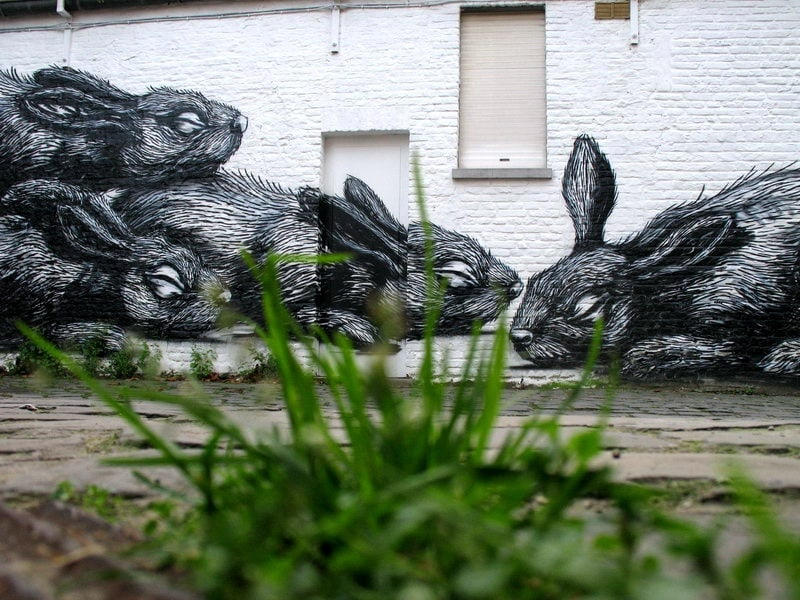 street_art_roa_10