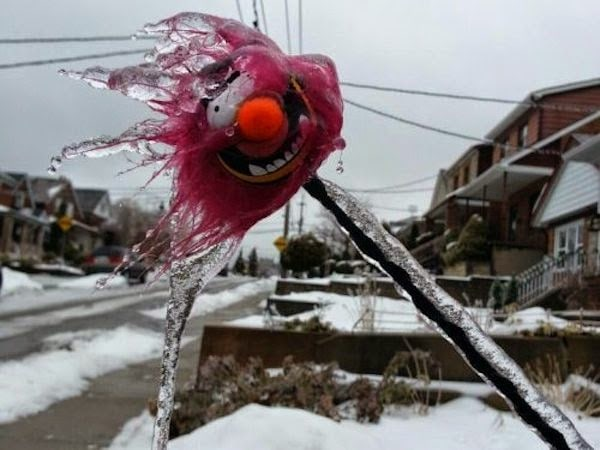A+frozen+and+icy+stuffed+animal.+-+The+30+Most+Amazing+Photos+Of+Frozen+Things+In+Honor+Of+The+Coldest+Morning+Of+The+21st+Century