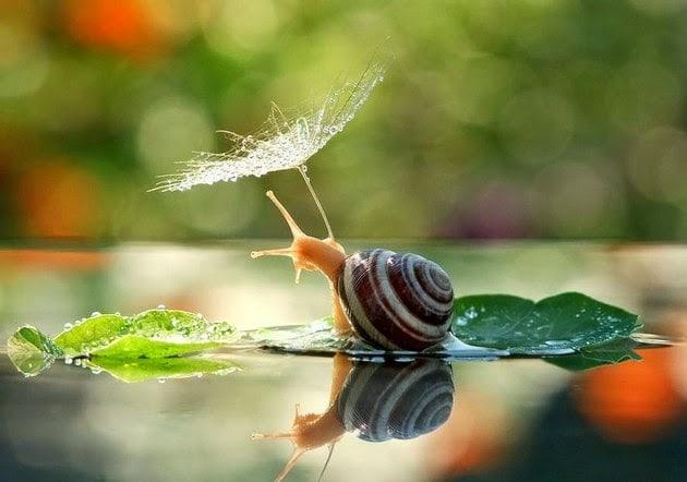 snail-macro-photography-vyacheslav-mishchenko-1