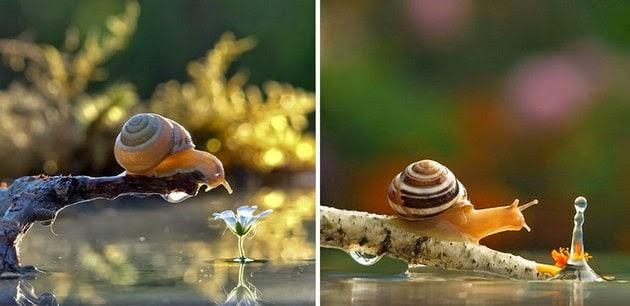 snail-macro-photography-vyacheslav-mishchenko-3