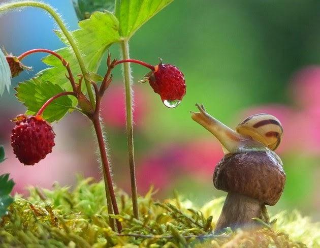 snail-macro-photography-vyacheslav-mishchenko-5
