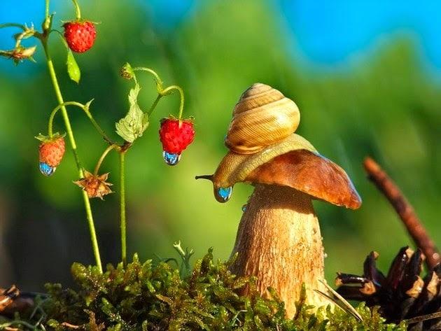 snail-macro-photography-vyacheslav-mishchenko-8