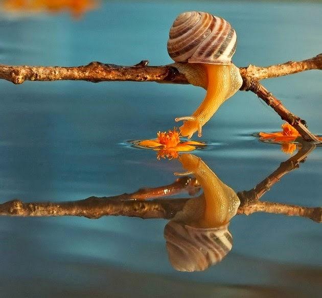 snail-macro-photography-vyacheslav-mishchenko1