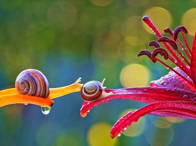 snail-macro-photography