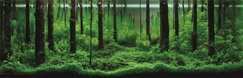 underwater-art-aquascaping-01-1024x332
