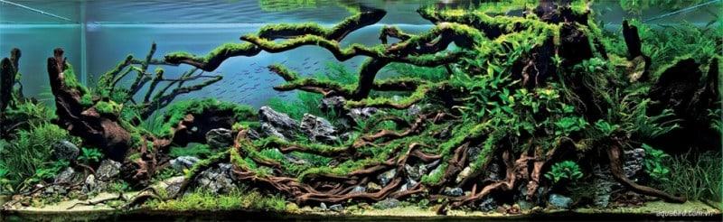 underwater-art-aquascaping-04-1024x316