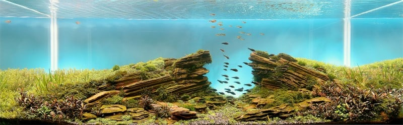 underwater-art-aquascaping-05