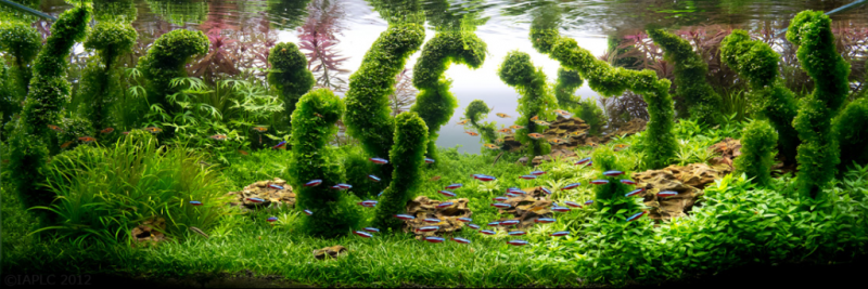 underwater-art-aquascaping-07-1024x343