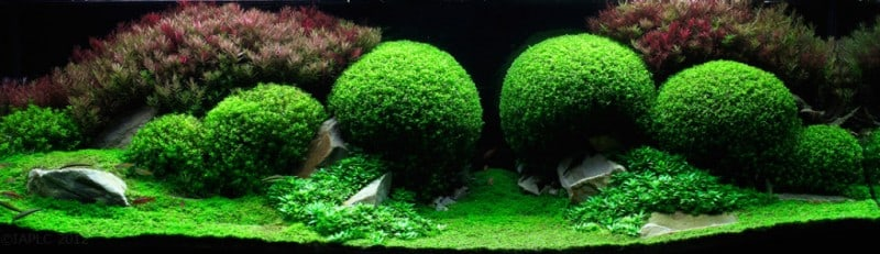 underwater-art-aquascaping-08-1024x296